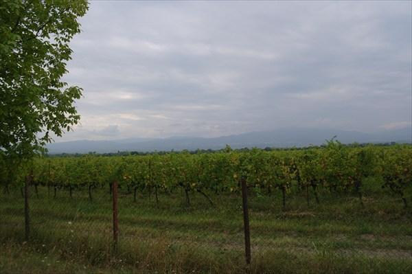 Виноградники Кахетии