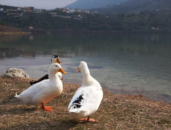 Птицы3