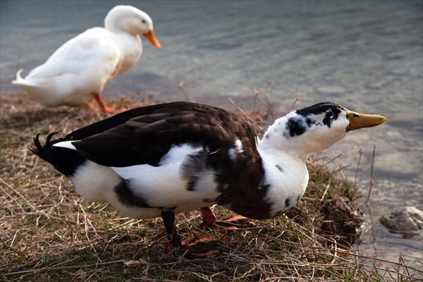 Птицы5