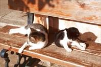 Кошки7