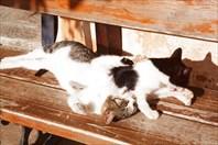 Кошки8