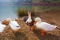 Птицы12