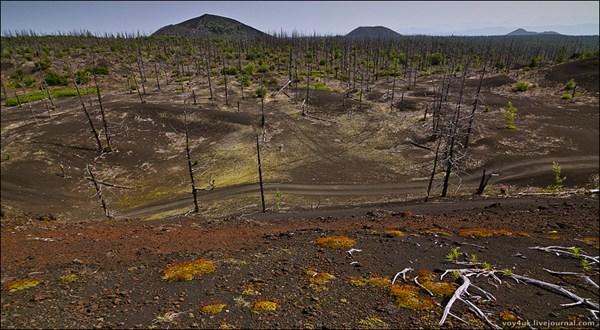 Мёртвый лес БТТИ