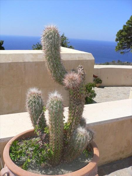 Монастырский кактус