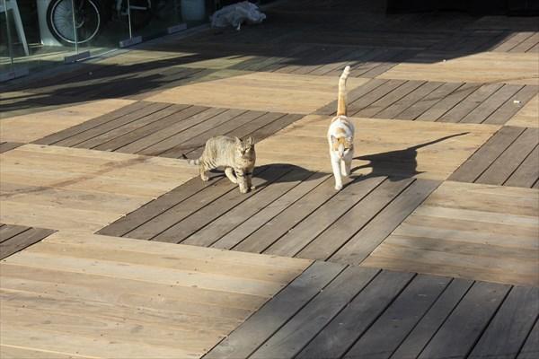 050-Кошки