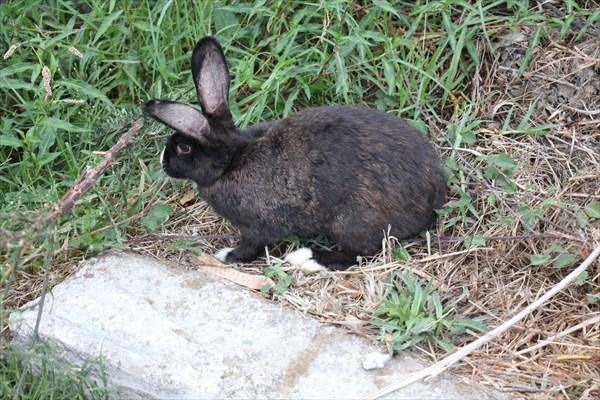 138-Кролик