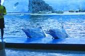Дельфины в очках.