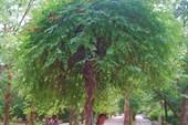 Парк санатория Саки, фонтан, Саки