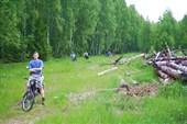Сквозь лес к Волге