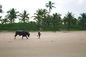Тренировки буйволов