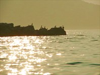 Залив Петра Великого 2006