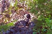 На водопаде Кивач