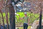 Странный объект на дереве