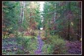тропа по лесу