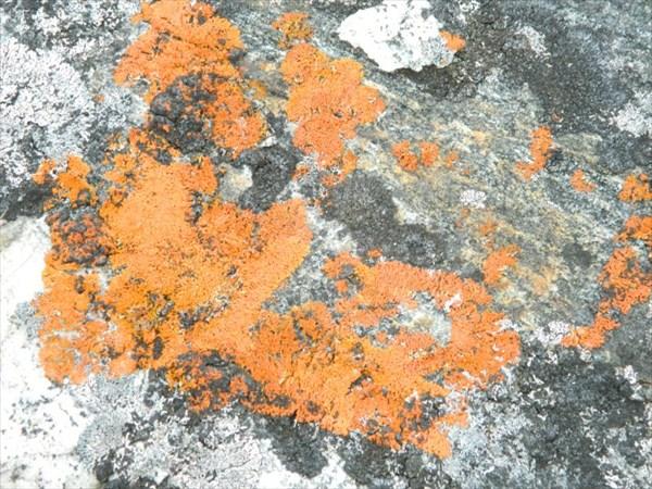 Кокоиха, рыжий мох