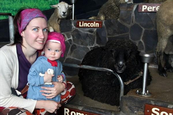Знакомятся с овцой породы Ромни (All Blacks!)