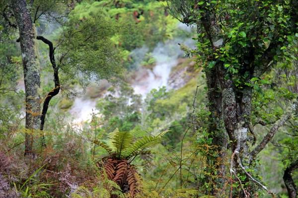 Окружающий лес
