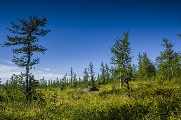 Лиственничное редколесье