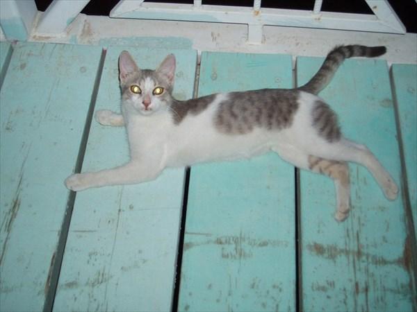 176-Кошка-поклонница