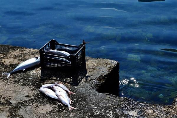 Кто сказал, что рыбы нет?! :-)