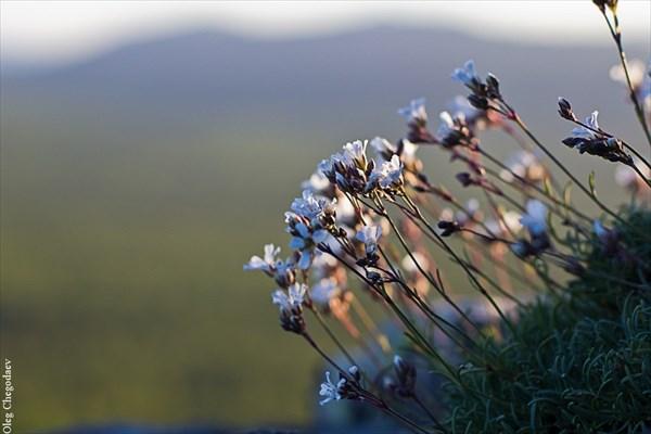 Южноуральские цветы