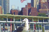 New York. Bird