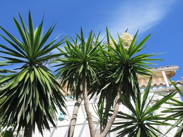 095-Пальмы