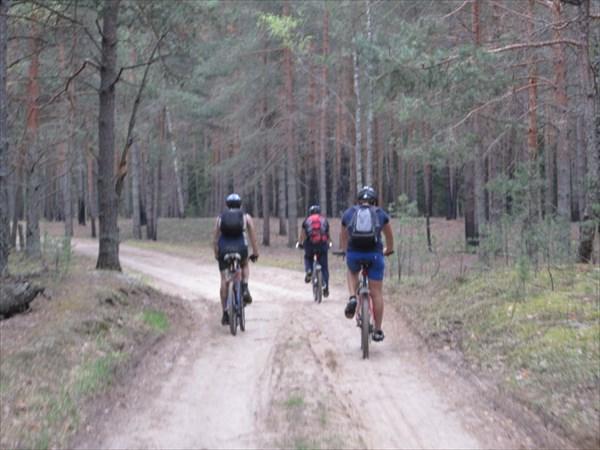 Лесными дорогами