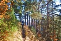 Альпийские луга Дженту