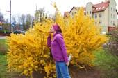 Катя в желтом