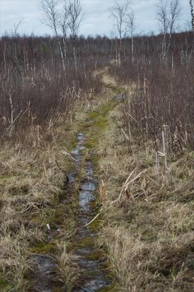 Исуповские болота
