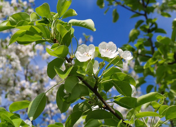 Весна в саратовском огороде