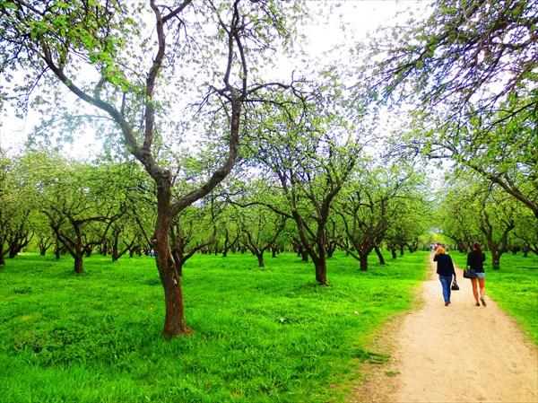 Дьяковский яблоневый сад