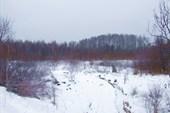 02 лес за околицей