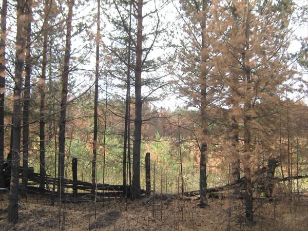 Следы больших пожаров 2010 года.