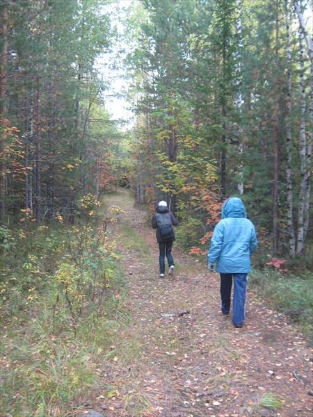 На лесной дороге.