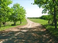 Дорога на д.Щербаки