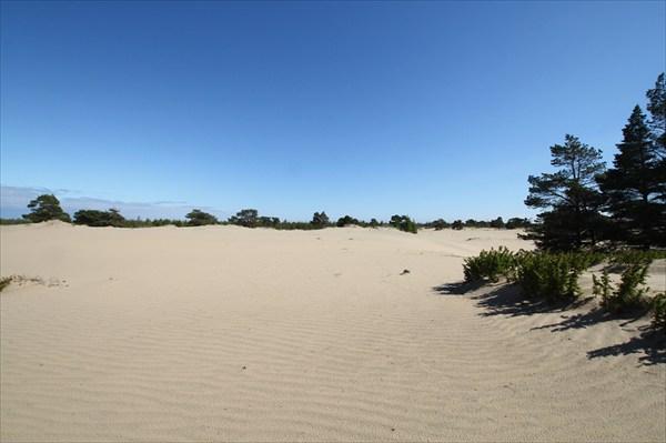 Кузоменьская пустыня