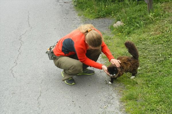 Кот, который пришёл к Алёне