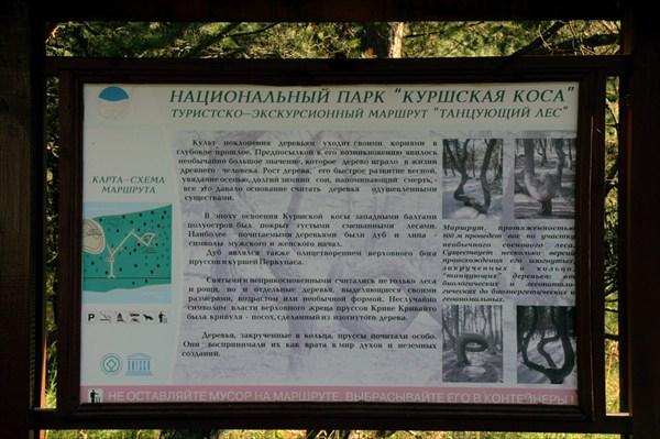 """Туристический марштут """"Пьяный лес"""""""