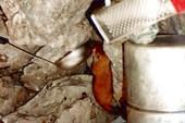 Бесстрашный горностай ищет чтобы съесть