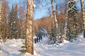 По зимнему лесу