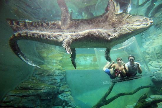 Crocosaurus4