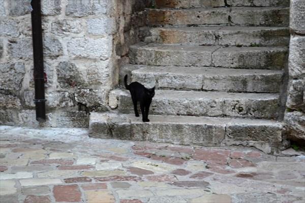 Котор - город камней и кошек ;-)