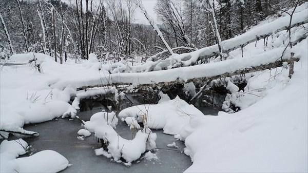 Бобровые плотины на Иогаче