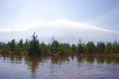 Заливной лес