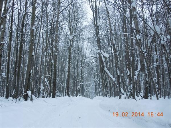 В тёмно-синем лесу...