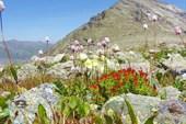 Альпийская клумба