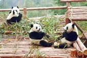 panda05-04_8m