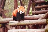 panda06-01_2m